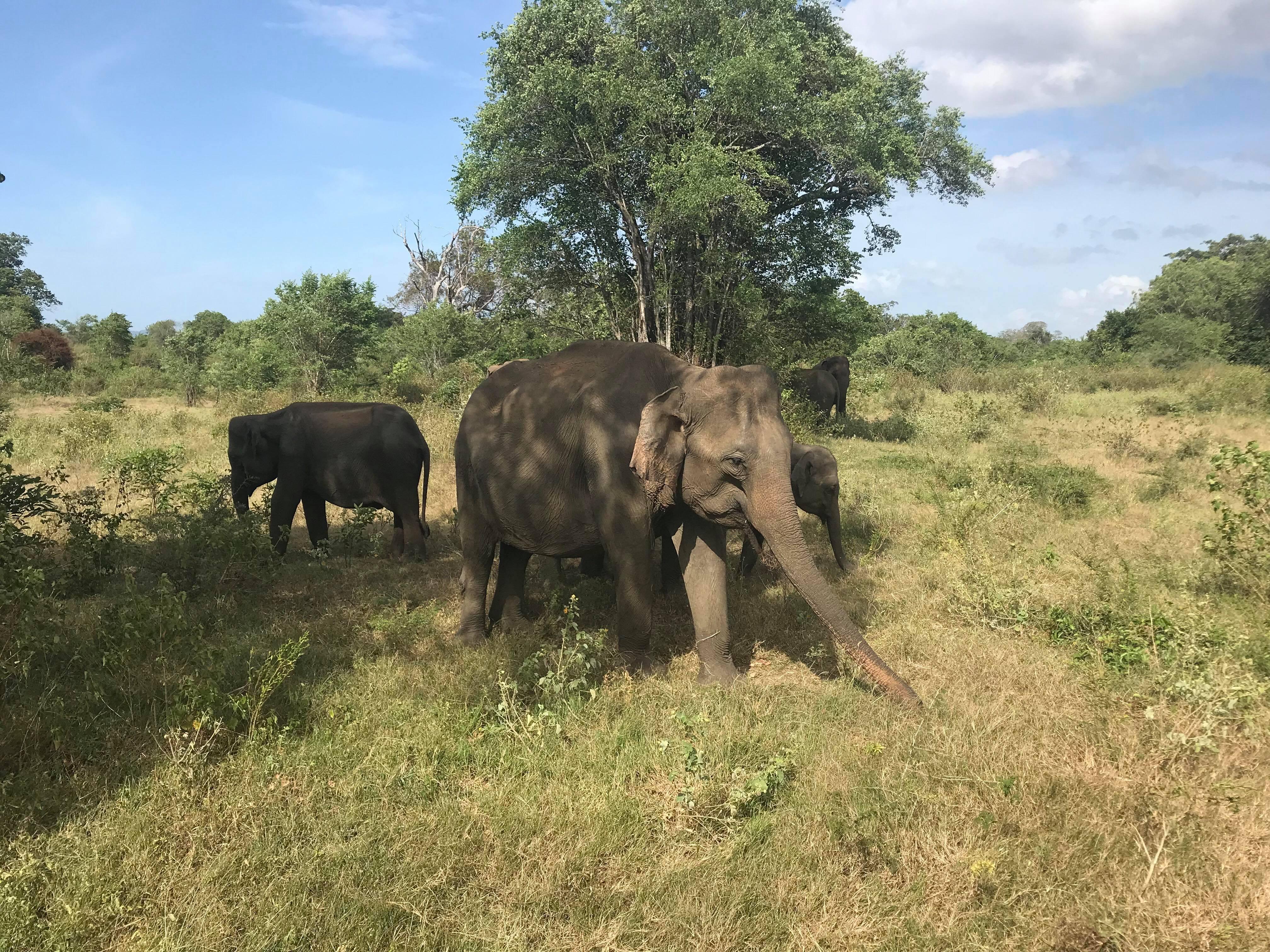 Slide Image for Udawalawe National Park